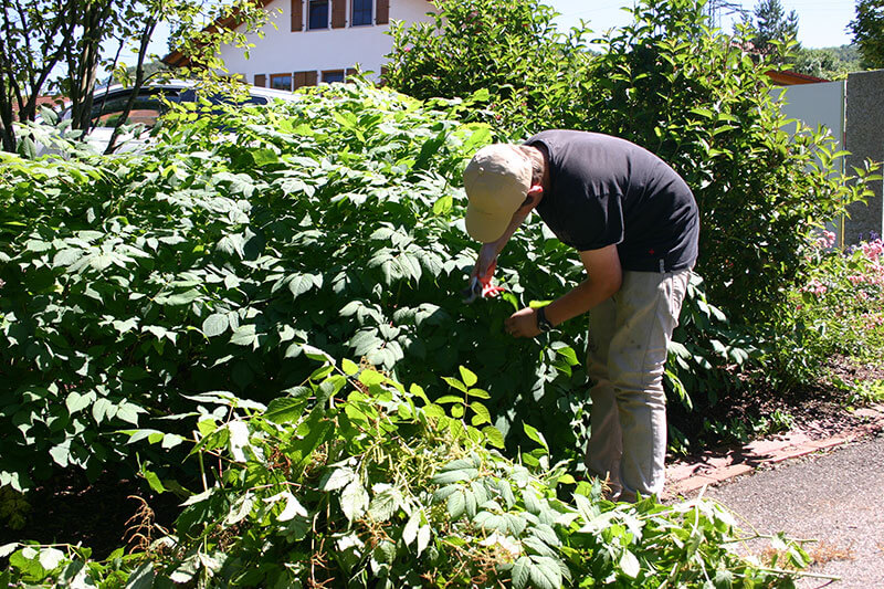 Gartenpflege - Schnittarbeiten vom Profi